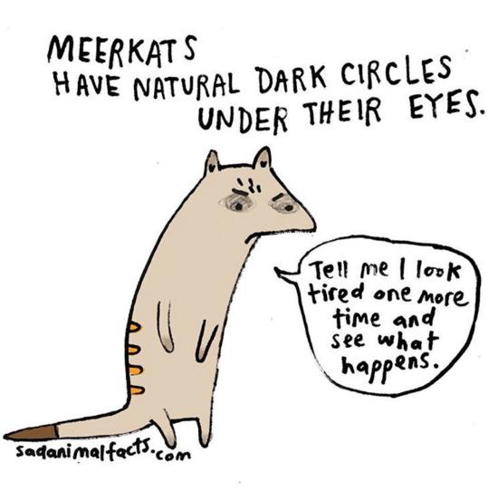meerkat eyes