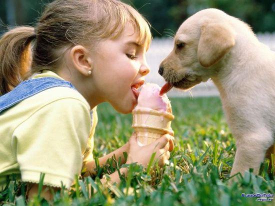 puppy sharing ice cream